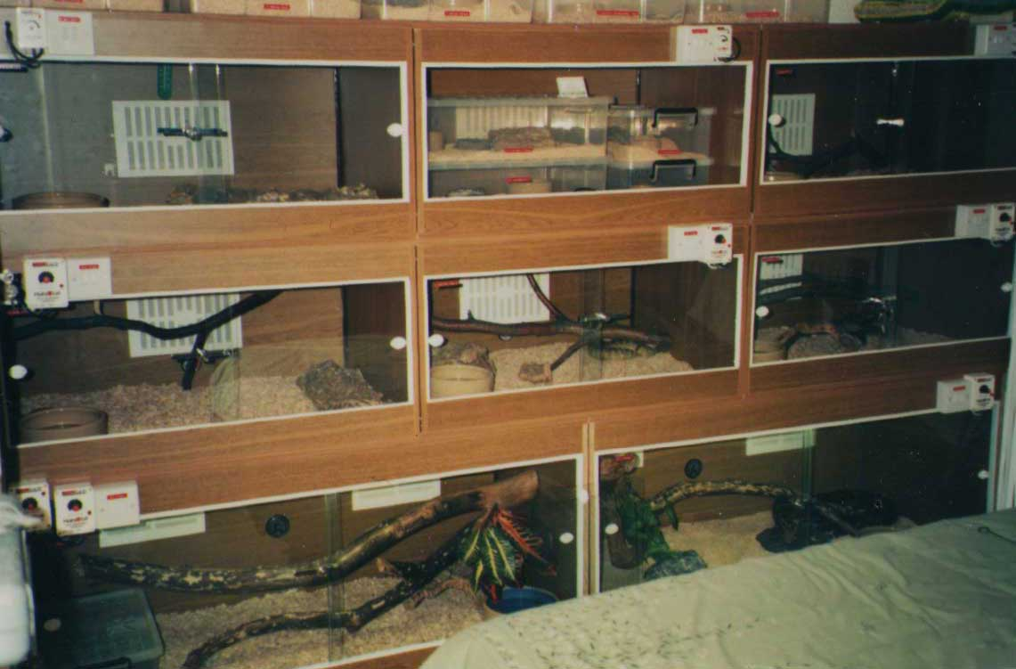 Image Taken In 1994 Of Part My Set Up England Using Melamine And Sliding Glass Door Terrariums